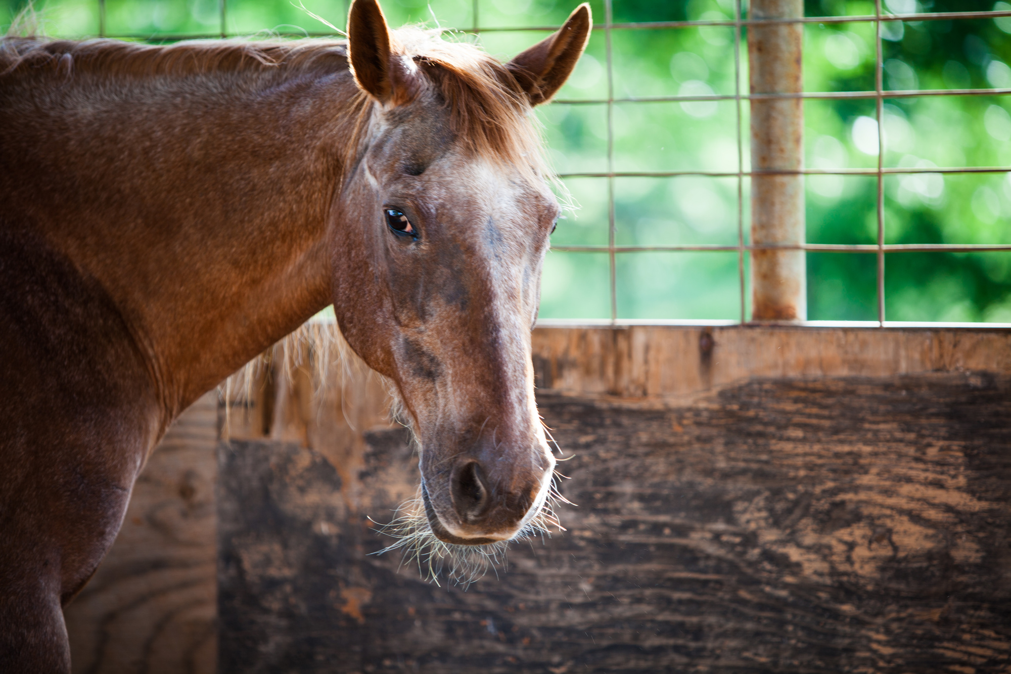 Buying A Young Horse Vs Old Horse Which Is Right For You Jon S Horses